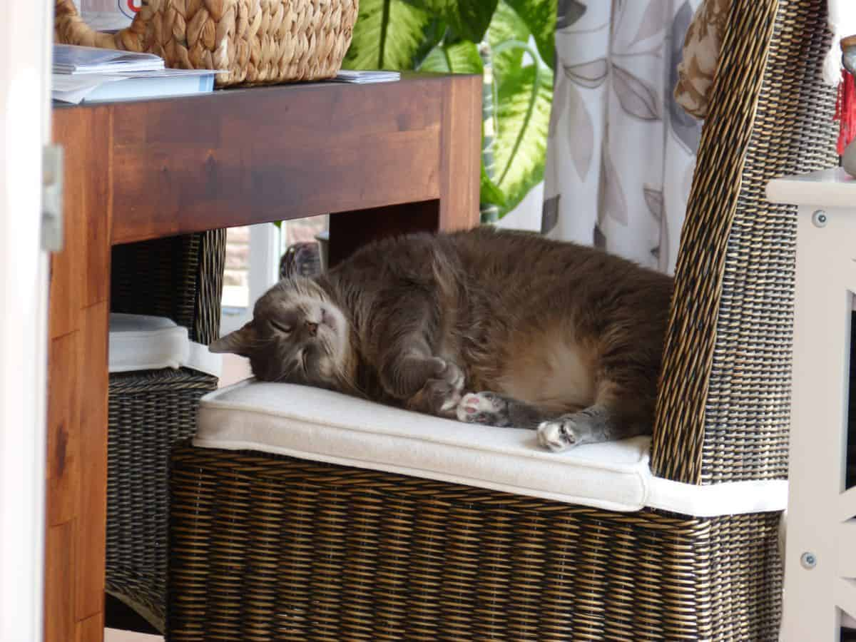 Katze oder Faultier :-)
