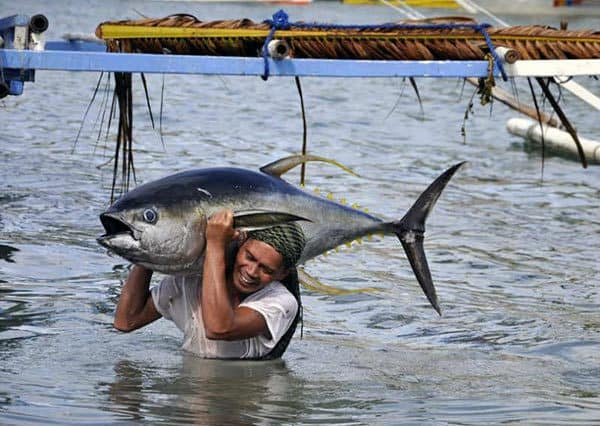 Tuna-in-Gensan